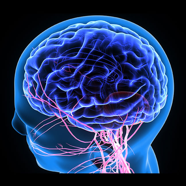 Randi Jordan Berkshies MA -  Craniosacral therapy