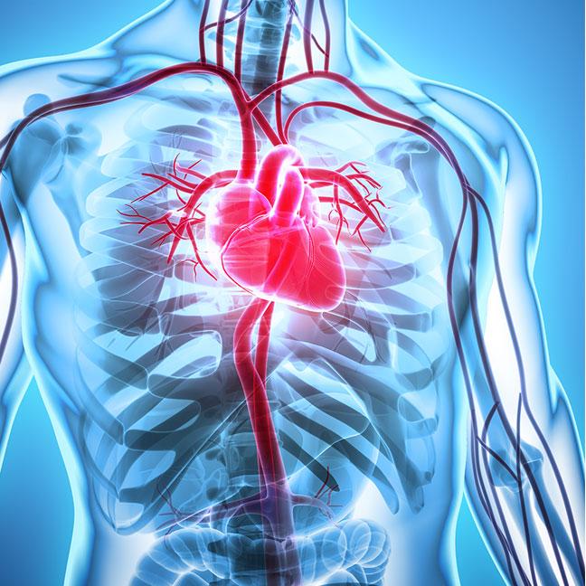 Vascular manipulation - Randi Jordan physical therapy Berkshires Massachusetts